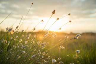 Wiese mit Sonnenuntergang, Umwelt